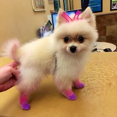 Add a little color to your pet's day with #PetExpressions chalking! (photo credit: @hannah_yaros)