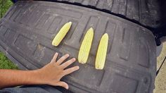 Corn Yield Concern on this episode of How Farms Work #FarmLife #AgProud