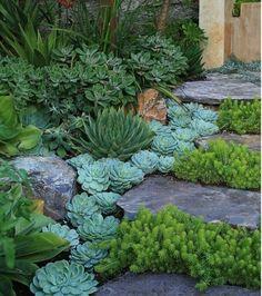 escalier en pierre, décorés de plantes succulentes, idée amenagement jardin à faire soi meme avec des plantes de rocaille exotiques