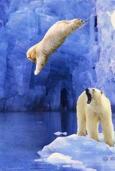 Impressionante salto