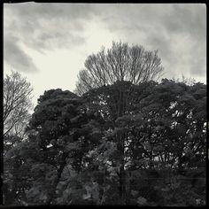 Broken weather. iPhone7/Hipstamatic  #trees #hipstamatic #youmobile #shotoniPhone #instadiary #shotoniPhone7 #instagramjapan #ig_japan #instadiary #iphonephotography #ink361_mobile #ink361_asia #reco_ig #igersjp #mwjp #team_jp_flower #indies_gram #hueart_life #ig_street #streetphotography #スマホ写真部 #写真好きな人と繋がりたい #写真撮ってる人と繋がりたい #tokyocameraclub #kanagawaphotoclub #iPhone越しの私の世界