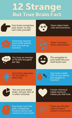 12 Strange but True brain facts you may enjoy knowing Healthy Brain, Brain Health, Healthy Mind, Dental Health, Healthy Foods, Brain Facts, Brain Science, Science Education, Physical Education