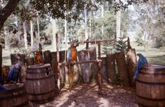 Abandoned Disney Treasure Island   Treasure Island- 1975