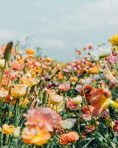 pictures of beautiful flowers bouquets Spring Aesthetic, Nature Aesthetic, Flower Aesthetic, Purple Aesthetic, Retro Aesthetic, Wild Flowers, Beautiful Flowers, Simple Flowers, Summer Flowers