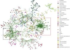 PlaNet: Combined Sequence and Expression Comparisons across Plant Networks Derived from Seven Species Plant Cell, Planets