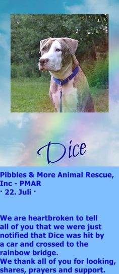 Dice A1032333 was rescued at 4/17/15 from nycacc shelters and adopted. He died after being hit by car at 7/22/2015.  Sleep well precious, we will never forget you.   https://www.facebook.com/PMARINC/photos/a.115160255175292.14168.109690175722300/1015562995135009/?type=1&theater