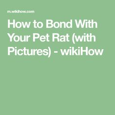 How to Bond With Your Pet Rat (with Pictures) - wikiHow