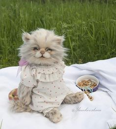 Kitty Elina By  Marina Yamkovskaia - Hello dear! I would like to present to you this beautiful teddy cat.It is my new collection of humanity cat. This collection will consist of 4 different kittens: two female cats and two male cats. The main idea of this collection is to showcats as little kids, or kids as cats.<b...