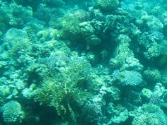 N Y Times story: Pace of Ocean Acidification Has No Parallel in 300 Million Years, Paper Finds Catamaran, Courses Hippiques, Dubai, Places In Egypt, Ocean Acidification, Fauna Marina, Chill, Honolulu Hawaii, Great Barrier Reef