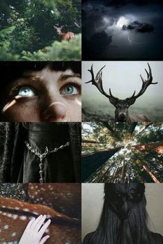 A Song of Ice and Fire House Baratheon aesthetic
