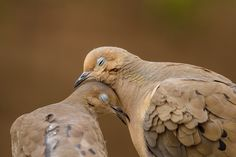 Photograph Dove Love by Jon Rista on 500px
