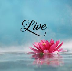 Short inspirational Quotes About life Sayings Live One thoughts