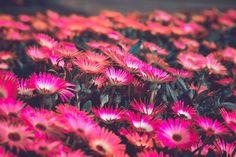 Flower Desktop Wallpaper, Cool Desktop Backgrounds, Hd Phone Wallpapers, Macbook Wallpaper, Aesthetic Desktop Wallpaper, Wallpaper Space, Wallpaper Desktop, Computer Wallpaper, Nature Wallpaper