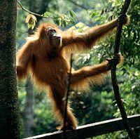Tropical Rainforest of Sumatra, Indonesia