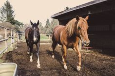Pen buddies #equihealthcanada #horse #firstaid #horses #ehc