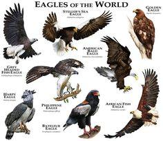 thumbs.imagekind.com 5589003_650 Eagles-of-the-World_art.jpg?v=1432394976