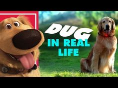 Disney•Pixar's Dug the Talking Dog In Real Life   Oh My Disney IRL - YouTube