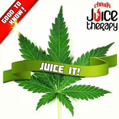 JUICING CANNABIS IS SO BENEFICIAL AND NOT PSYCHOACTIVE! HERE IS A SNIPPET FROM AN ARTICLE I READ….   Juicing for IC.