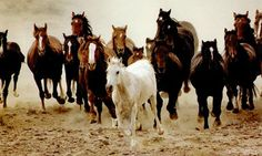 """""""O GRITO DO BICHO"""": Os Navajos vão ajudar a controlar o abate de caval..."""