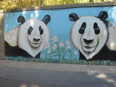 San Diego Zoo Panda Exhibit