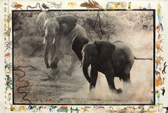 Donate here to support The Elephant Orphanage, Zambia. https://www.volunteerforever.com/volunteer_profile/valerie-downs  Peter Beard, Buffalo Springs, Kenya, July, 1960