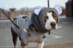 DoggyStyle: Where the Pups Offer PSA's by Snooding Up