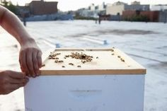 Annie Novak | The Selby                              Urban Beekeeping