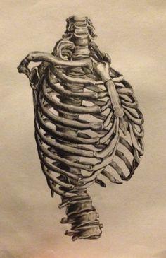 ORIGINAL non print- 9x12 realistic drawing of human ribcage and spinal column etsy.com/shop/byAndre