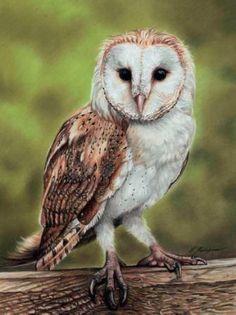 How to Draw A Barn Owl Using Pastel Colored Pencils~ Artist Lucy Swinburne Owl Bird, Bird Art, Pet Birds, Pastel Drawing, Pastel Art, Barn Owl Sounds, Beautiful Birds, Animals Beautiful, Pastel Pencils