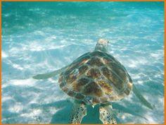 Kuredu Maldives - I hope I see a sea turtle when we snorkel!!