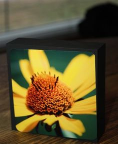 Cone Blossom,Photo Block,5X5 Wood Framed,Floral Flower,Yellow Cubicle   5x5 photo block, photograph printed on fine art paper.  All prints are from my photographs.  Decorate your office, perfect for h