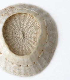 alice_fox_findings_stitched_limpet