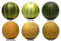 melon types - Google Search