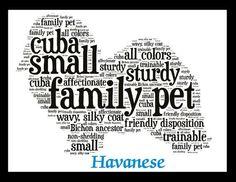 Havanese word art