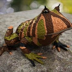 Reptiles and Amphibians reptilestrd Amazing Reptiles Argentine Horned Frog Funny Frogs, Cute Frogs, Reptiles Et Amphibiens, Mammals, Unusual Animals, Rare Animals, Strange Animals, Weird Creatures, All Gods Creatures