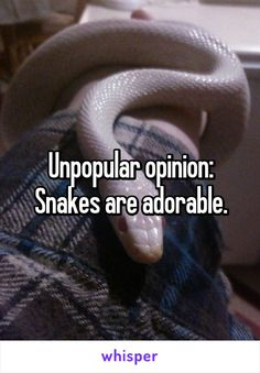 Unpopular opinion: Snakes are adorable.