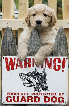 Golden retriever puppy above fence with warning sign