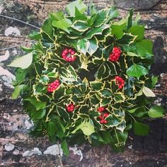 Variegated holly and ivy.