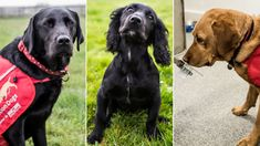 The dogs that smell breath to monitor diabetes