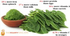 Have you heard of moringa? This plant is causing quite the stir in the health community. Also known as drumstick or Malunggay, moringa trees...
