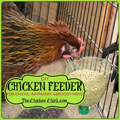 Make a chicken feeder from recycled plastic bottles!