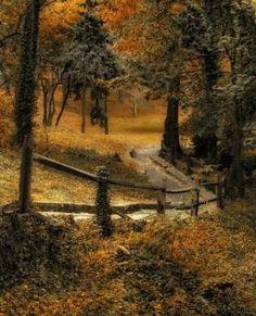 Ao longo de um trajeto arborizado por MyohoDane