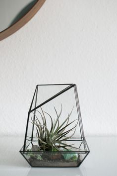 Happy Interior Blog: Giveaway: Win One Urban Jungles Terrarium