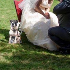 Custom Dog Cardboard Cutouts. Wedding props or gifts for