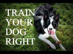 ▶ How to train your dog - Understanding training methods and techniques - YouTube