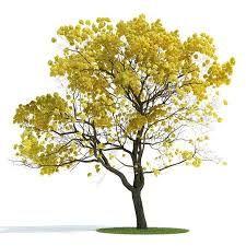 New Tree Texture Photoshop Architecture Ideas - - Architecture Graphics, Landscape Architecture, Landscape Design, Yellow Leaf Trees, Tree Photoshop, Plant Texture, Photoshop Rendering, Photoshop Texture, Tree Sketches