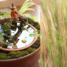 Daily Colours : Fairy Spring Garden