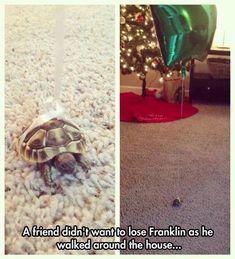 Balloon tied to Turtle