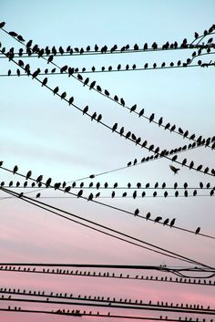 Birds On The Wire by Faith Alexandra