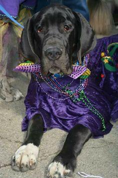 Mardi Gras for Max! Let's paaaartay!!!!